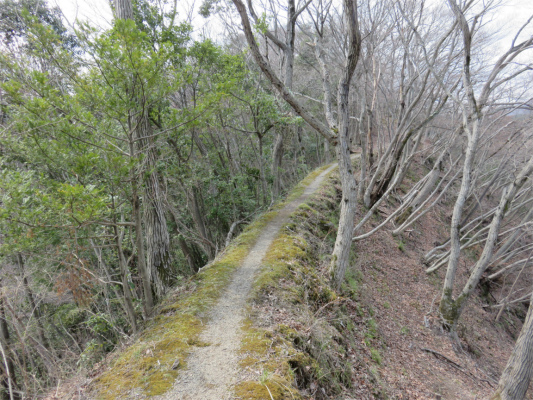 雰囲気の良いハイキングコース