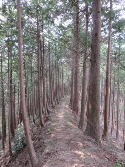 道志ハイキング歩き易く風が心地良い素晴らしい時間