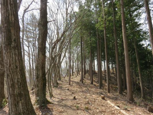 上ノ山ハイキングコース