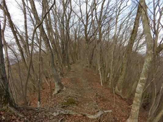 新緑の頃良いハイキングコース