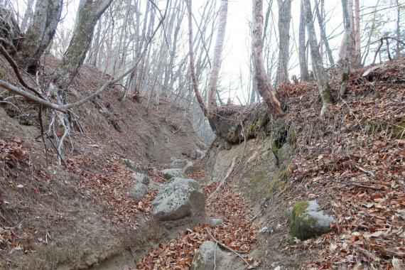裂石から上日川峠の登山道