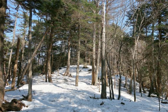 大菩薩嶺の山頂樹林帯歩き