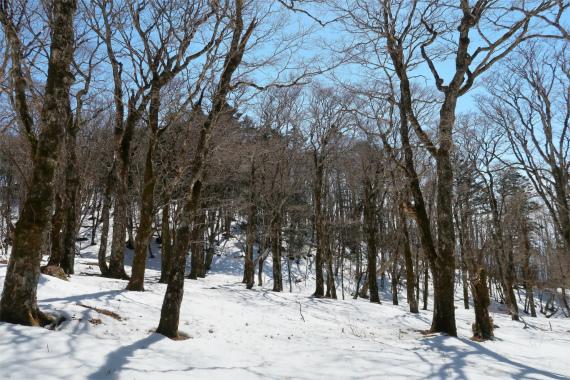 黒岳周辺も積雪が深く小金沢連嶺の洗礼