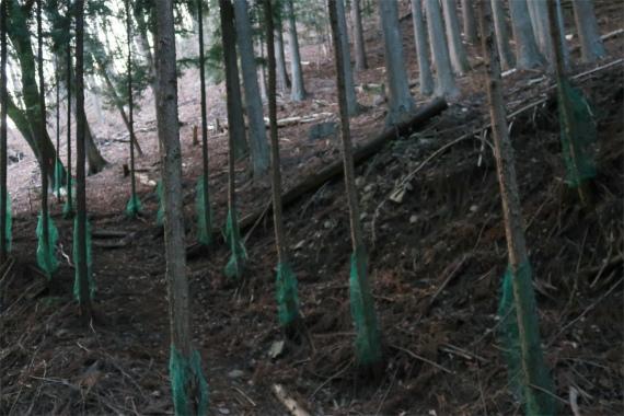 林道から撮った滝子山登山口(檜平へ至る)周辺