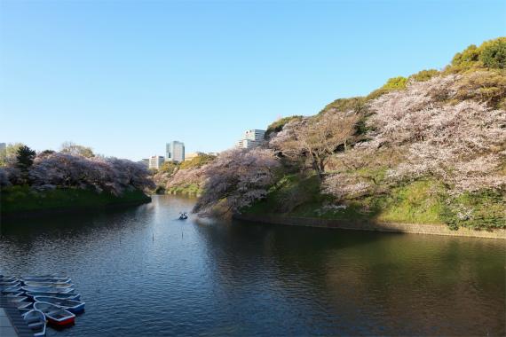 東京駅から千鳥ヶ淵までの様子