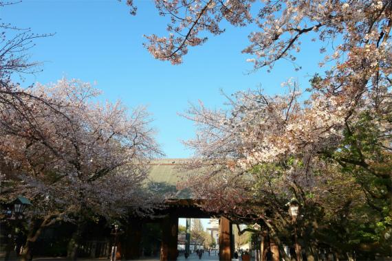 靖国神社の参道桜並木