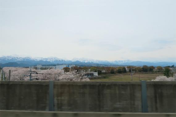 北陸新幹線の富山駅桜が満開