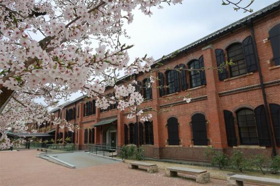金沢赤レンガそ桜のコラボ