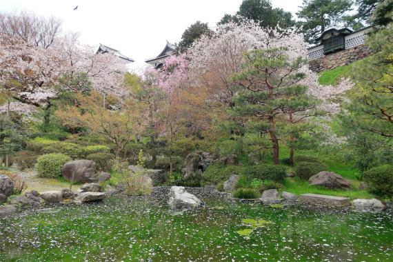 水面に桜の花びらがプカプカ浮かびバックに桜並木