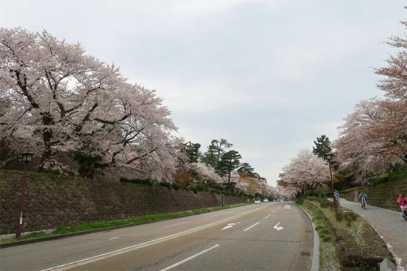 百万石通り主要幹線道路で金沢城址の脇を通っている桜が綺麗