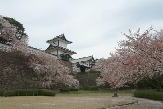 桜の木とお城