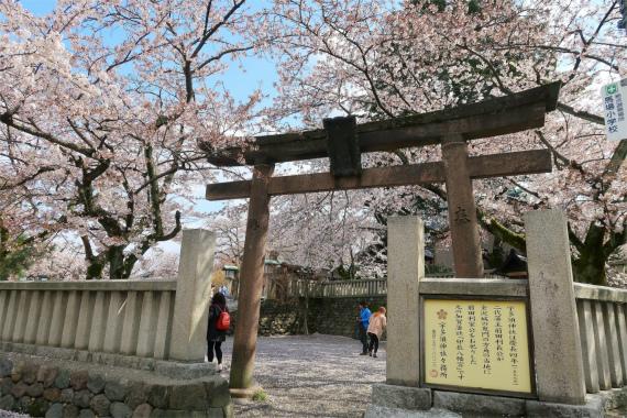 金沢桜の名所宇多須神社と鳥居