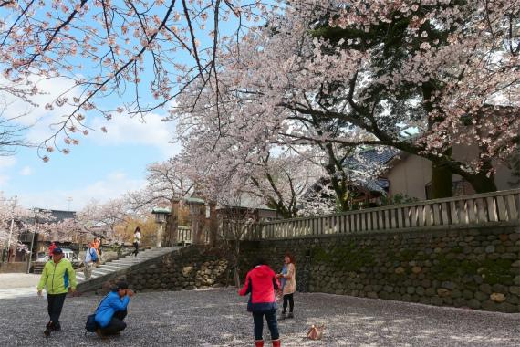 宇多須神社桜一色の境内と観光客