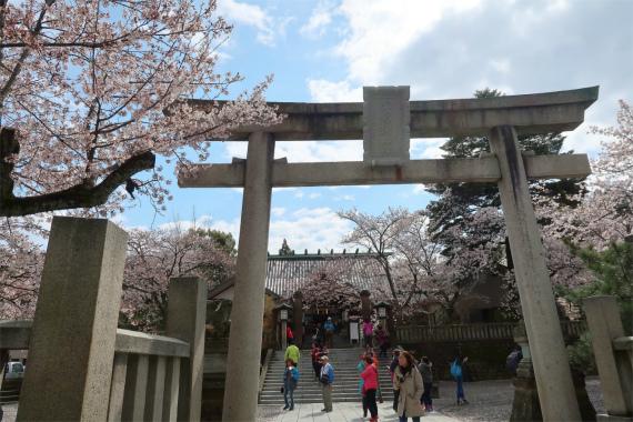 宇多須神社の桜