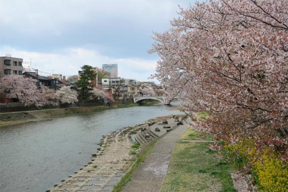浅野川沿い遊歩道