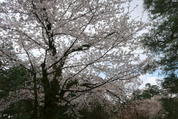 桜ヶ岡周辺の景色