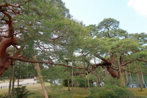 唐崎松の松並木