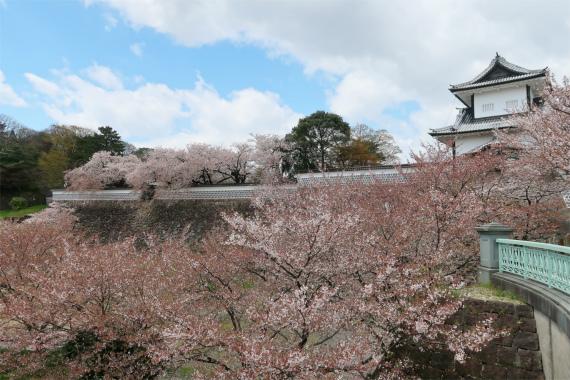金沢城と桜のコラボ