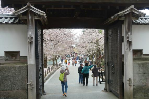 石川門から見た金沢の桜
