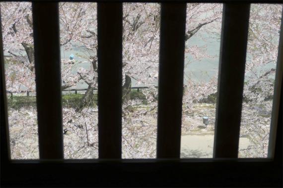 石落しから見た金沢城の桜