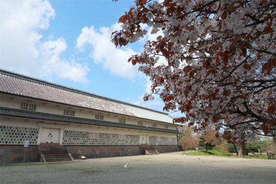 三十間長屋周辺桜の木々