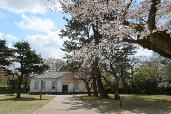 第九師団司令部桜の木