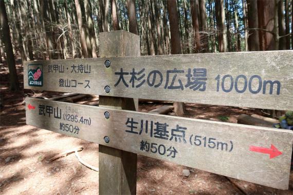 武甲山表参道大杉