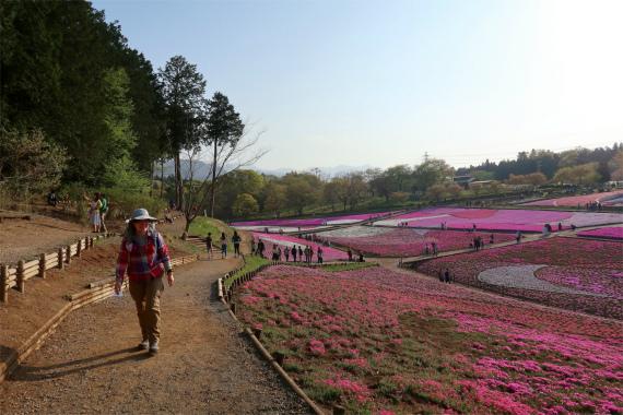 羊山公園の芝桜の絶景
