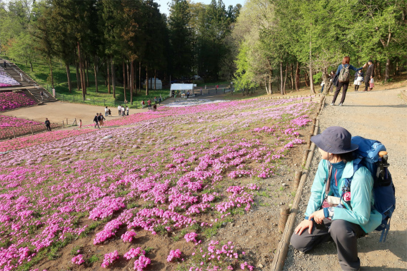 羊山公園の芝桜にウットリ