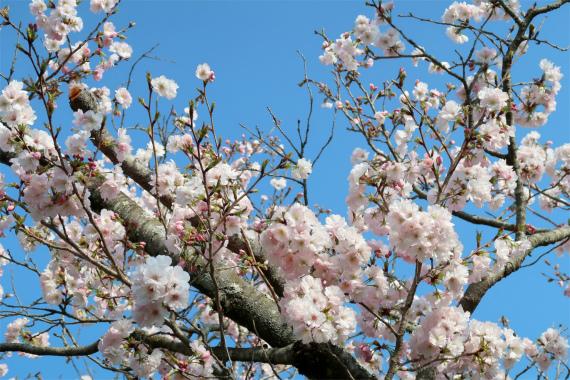 外秩父七峰ハイキングコースお花が多く