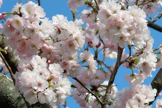 外秩父・奥武蔵遅い春の訪れ