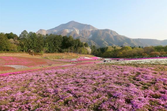 武甲山と芝桜は絵になります