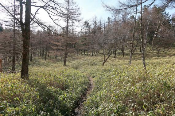 唐松尾山から笠取山まで