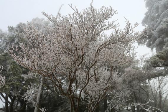 燕山ルート上に霧氷