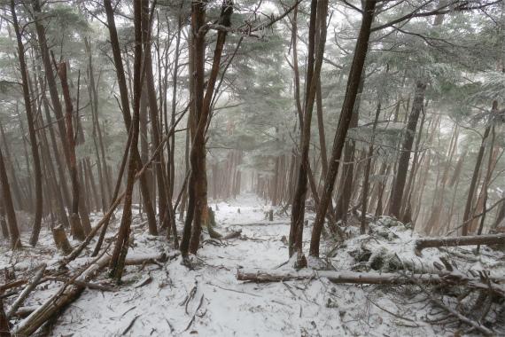 古礼山から水晶山への下りのルート