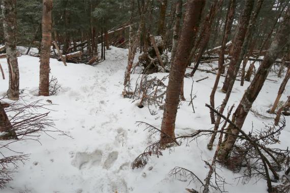 水晶山から雁坂峠までのルート