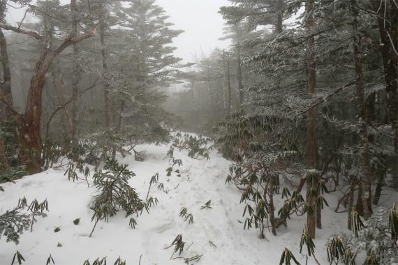 甲武信小屋を目指していくと積雪が凄く