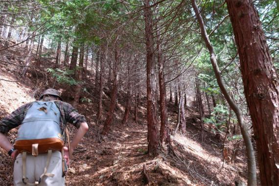 境沢の頭への登山道