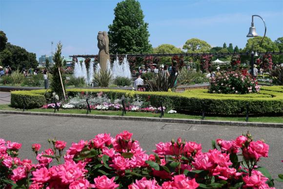 山下公園の中心にある噴水とバラ