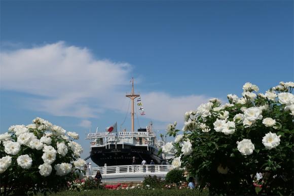 横浜のバラと氷川丸