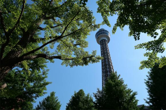 山下公園から見るマリンタワー新緑
