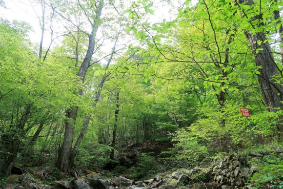 三頭山・都民の森空気がとても美味