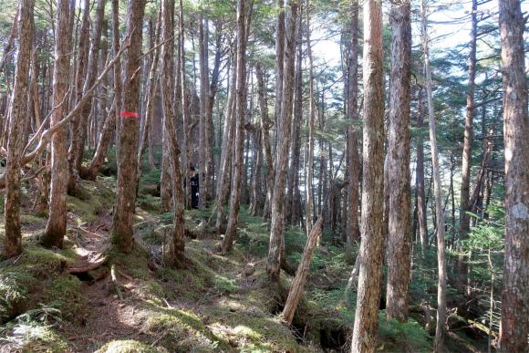 奥秩父バリエーションルートらしい鬱蒼とした樹林帯