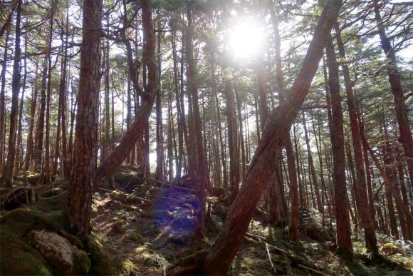 小川山の一般登山ルートとの合流が近づいてくる