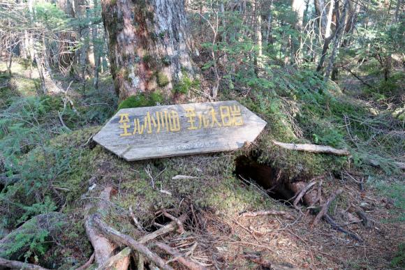 小川山への一般登山道と合流