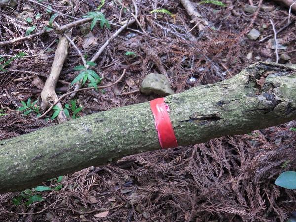 登山中によく見かける代表的なマーキングの1つである「赤テープ