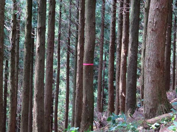 樹林帯を歩いているとマーキング