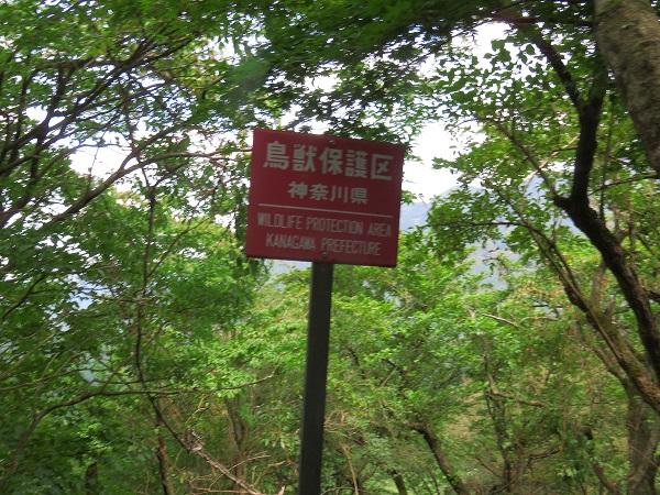 鳥獣保護区バリエーションルート