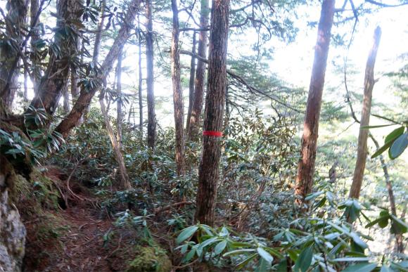 奥秩父のバリエーションルートマーキング登山道を意味
