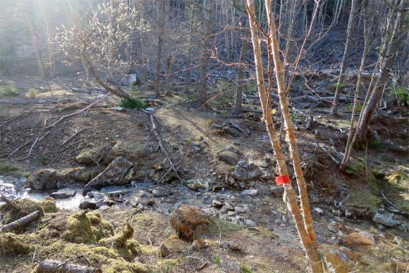 沢の手前の2本の木の左に赤テープのマーキング